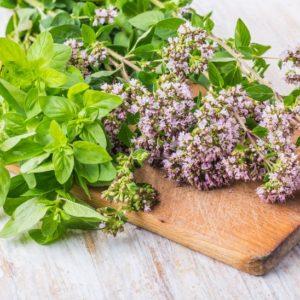 Oregano: Powerful Medicine in The Kitchen