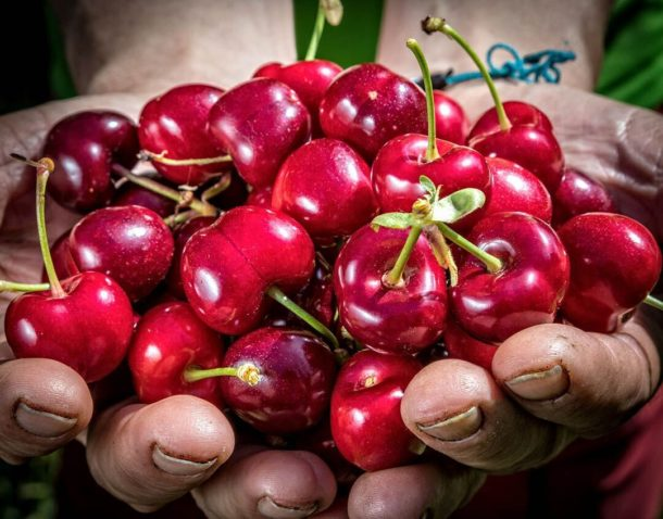 extremadura cherries